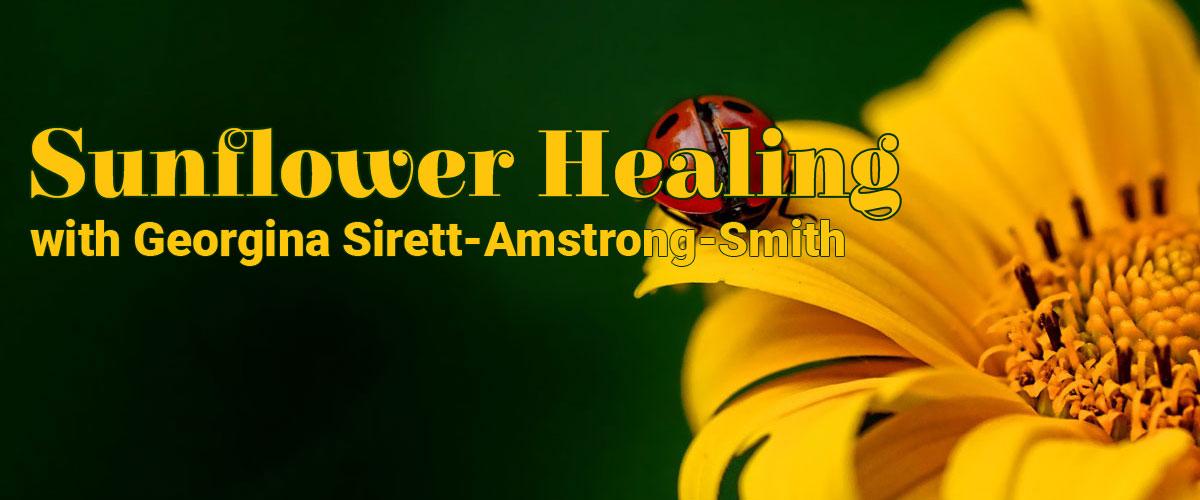 Sunflower ladybird